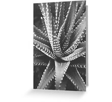 Cactus Species v.2 Greeting Card