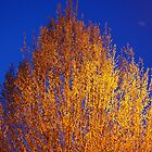 Streetlamp tree by Desaster