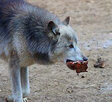 Spoils - Wolf by Tony Wilder