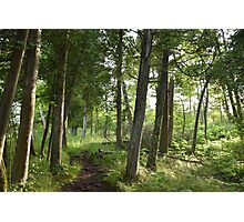 Lost in the Woods Photographic Print