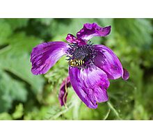 purple enemie with wasp on it Photographic Print