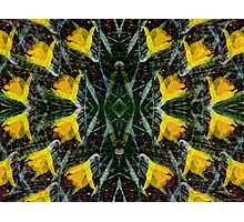Kaleidoscopic Garden 26 Photographic Print