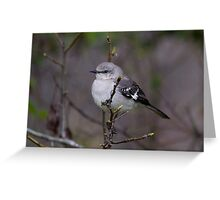 Northern Mockingbird (Mimus polyglottos) Greeting Card