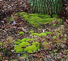 Moss in the Woods by Gilda Axelrod