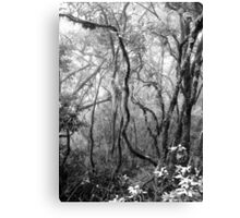 Rainforest No.8 Canvas Print