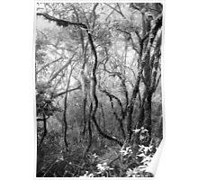 Rainforest No.8 Poster