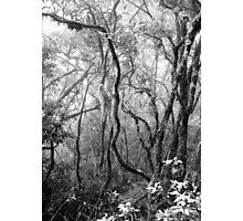 Rainforest No.8 Photographic Print