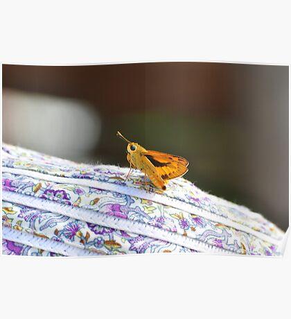 Oz moth on a Pom hat Poster