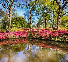 Spring Lake by Wayne Gerard Trotman