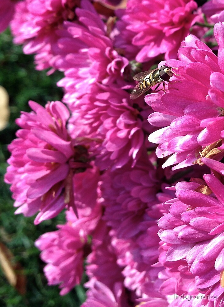 Hoverfly Amoung the Flowers by lindsycarranza