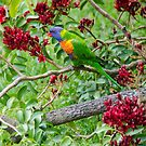 Parrot Paradise by Georgie Hart