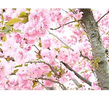 Fairy Blossom Photographic Print