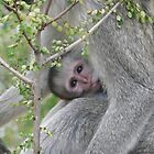 BABY MONKEY by David Lumley