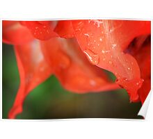 Rain Dance - Red Flower Photography By Sharon Cummings Poster