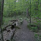 Into the forest by DreamCatcher/ Kyrah Barbette L Hale