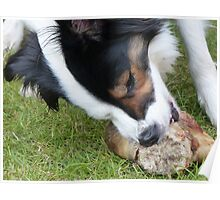 BC Chewing on Bone Poster