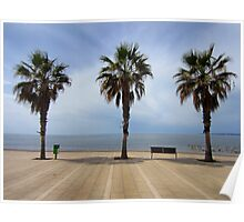 Palma palms Poster
