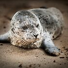 Sea Lion Baby close up by damhotpepper