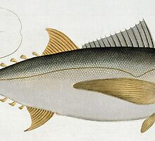 Tuna (Scomber Thynnus) by Bridgeman Art Library