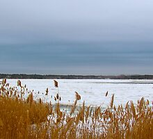 Snow and beach grass by GleaPhotography