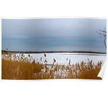 Snow and beach grass Poster