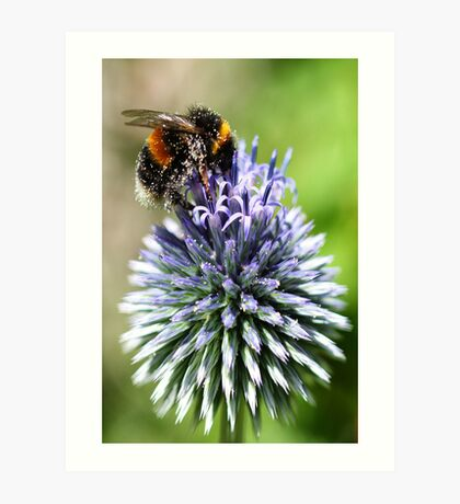 Dusted with pollen Art Print