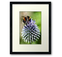 Dusted with pollen Framed Print