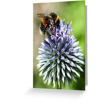 Dusted with pollen Greeting Card