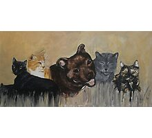 Furry Family Photographic Print