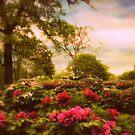 Peony Park by Jessica Jenney