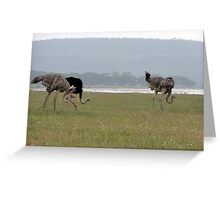 Ostriches Greeting Card
