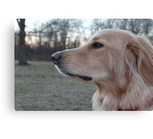 Dog/ Hovawart Canvas Print