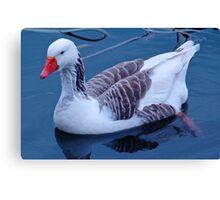 Domestic Goose Canvas Print