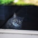 Looking out the back door by Lynn Starner