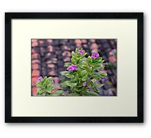 Water and Flower Framed Print