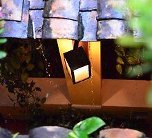 In Rain by fotosvn