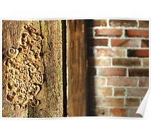 16.4.2014: Mushrooms in the Cellar Poster