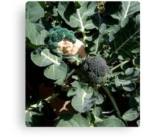 Broccoli Baby Canvas Print