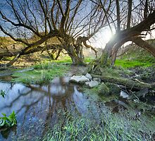 Swallowhead Spring Holy Well by Celtic Mystery