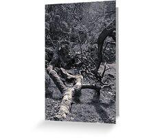 Trees, Dane (4) Greeting Card