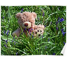 Teddy In The Bluebells Poster