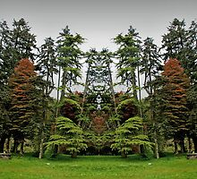 Mirrorlandia Woods by Yampimon
