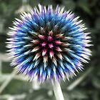 Rainbow Thistle by Yampimon