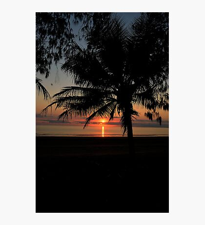 Morning Coconuts Photographic Print