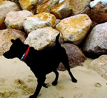 Black Lab Dog by GleaPhotography