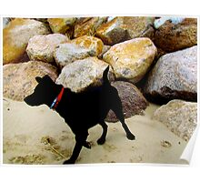 Black Lab Dog Poster