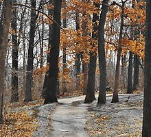Path Through The Trees by Patty Hagedorn