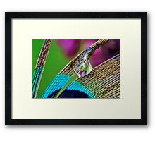 Peacock and Lilac Framed Print
