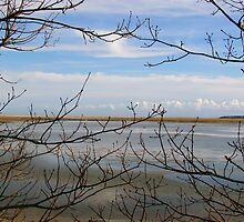 Branches through the Pond by GleaPhotography