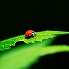Little Red Ladybug on Green Leaf by Christina Rollo